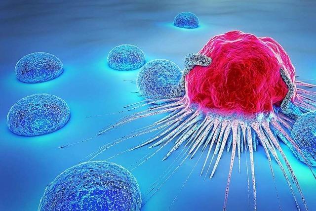 Car-T-Zell-Therapie – aussichtsreiche Methode für Blutkrebspatienten
