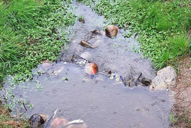 Fische sterben im Floßkanal aufgrund der Trockenheit