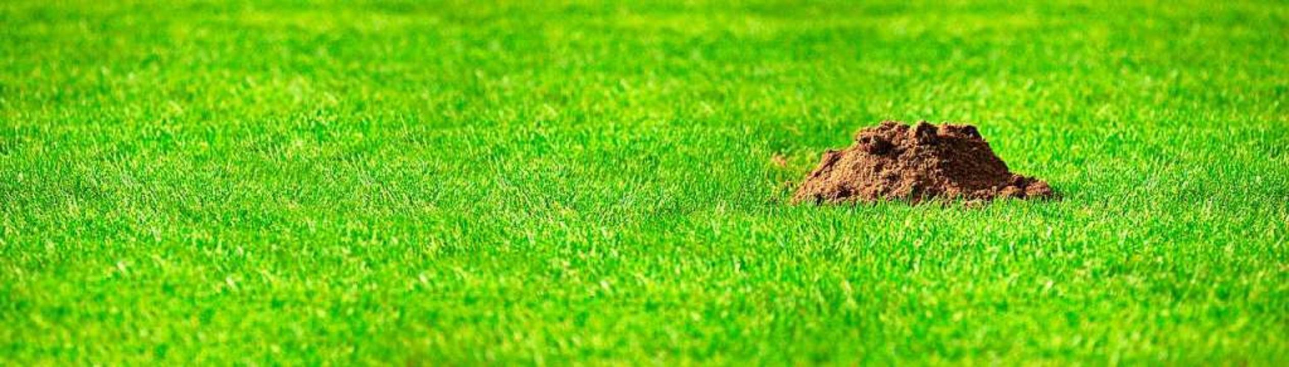 Ein Maulwurfshügel  | Foto: stock.adobe.com