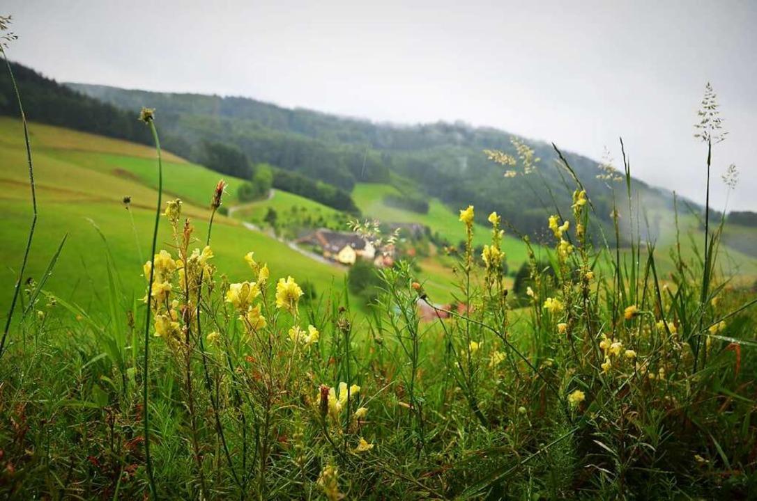 Pflanzenvielfalt entlang der Wege    Foto: Kathrin Blum