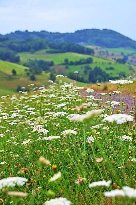 Weiden und sanfte Hügel    Foto: Kathrin Blum