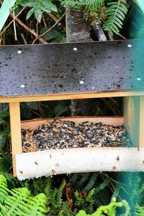 Was zum Futtern – aber für die Vögel.    Foto: Kathrin Blum