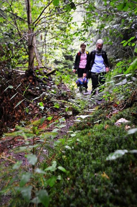 Ein Teil der Strecke geht durch den Wald.    Foto: Kathrin Blum