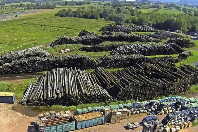 Waldumbau kostet Milliarden
