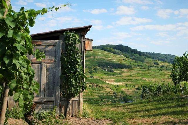 Wandertipp: Den Kaiserstuhl von Ihringen aus entdecken