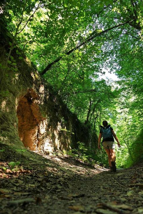 Typisch für den Kaiserstuhl: die Hohlgassen.  | Foto: Silke Kohlmann