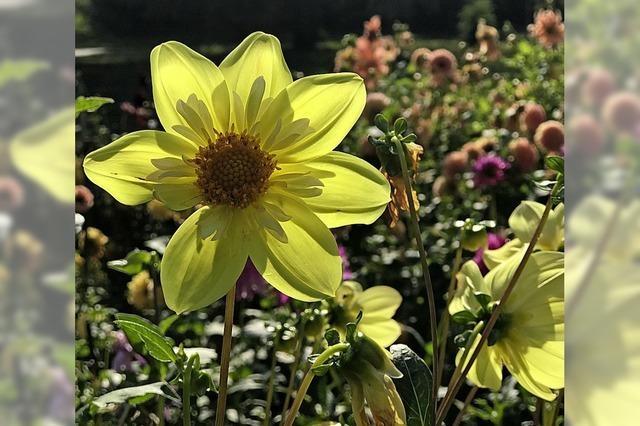 Blumengrüße aus dem Bad Krozinger Kurpark