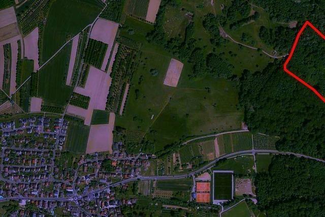 4,1 Hektar vom Rammersweirer Wald sollen weichen