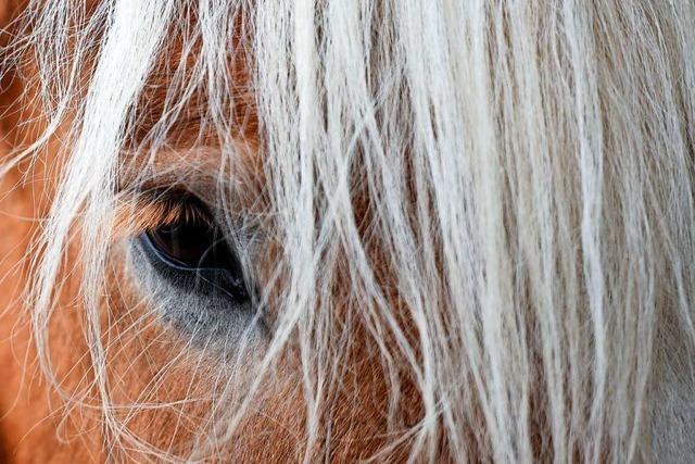 Was sind das für Menschen, die Pferde schänden?