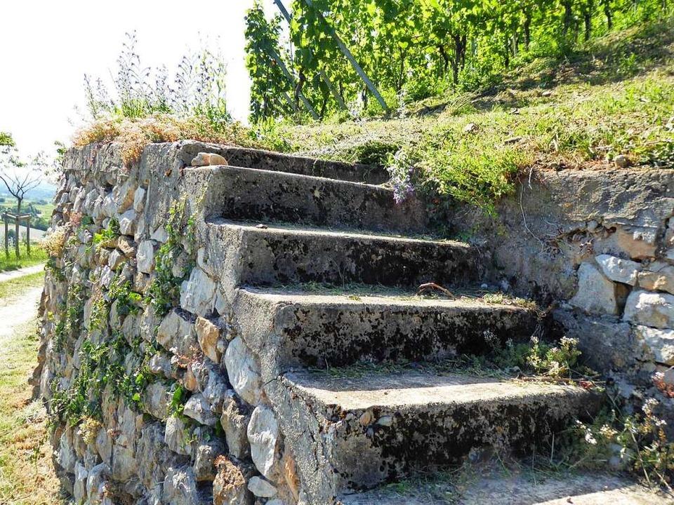 Die Trockenmauern am Castellberg speic... macht auch viele Reptilien glücklich.  | Foto: Michael Neubauer