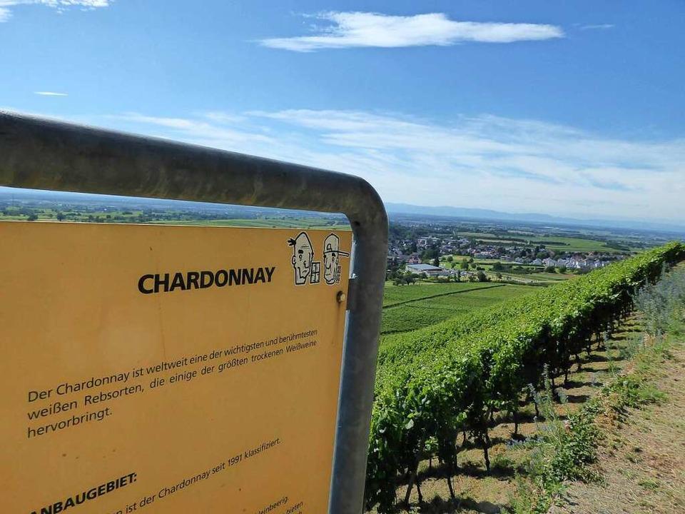 Wer will, kann auf dem Weg auch einiges über Wein erfahren.  | Foto: Michael Neubauer