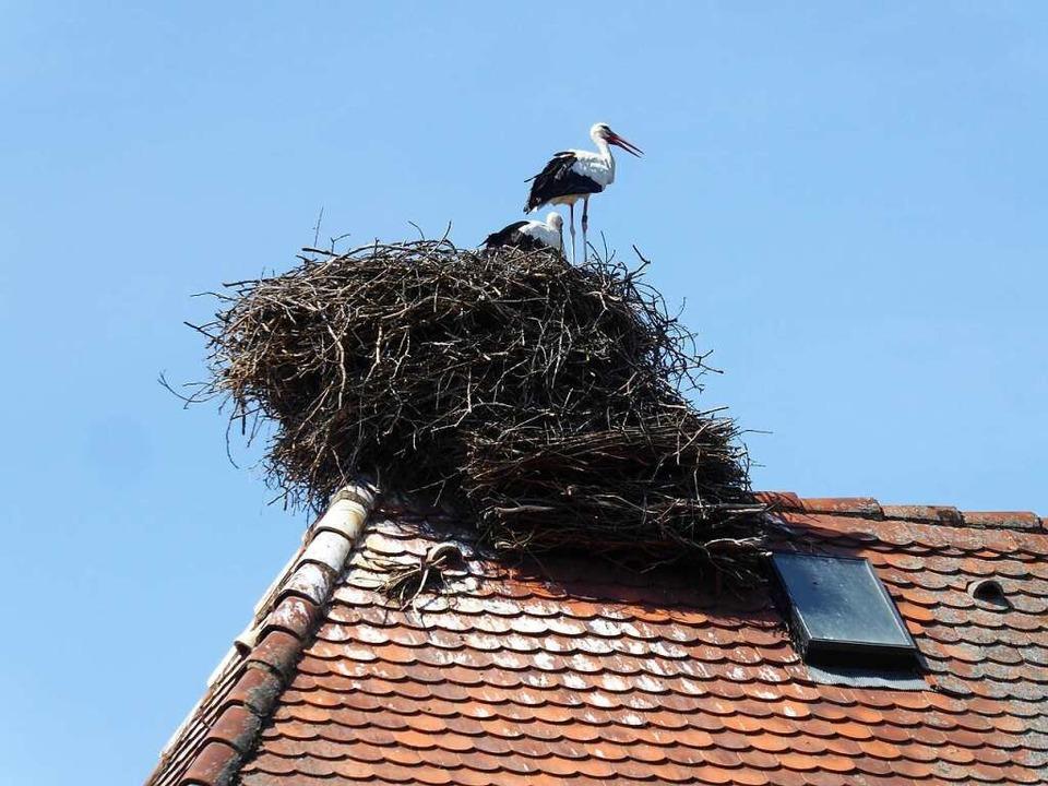 In Grunern lohnt es sich, nach oben zu schauen.  | Foto: Michael Neubauer