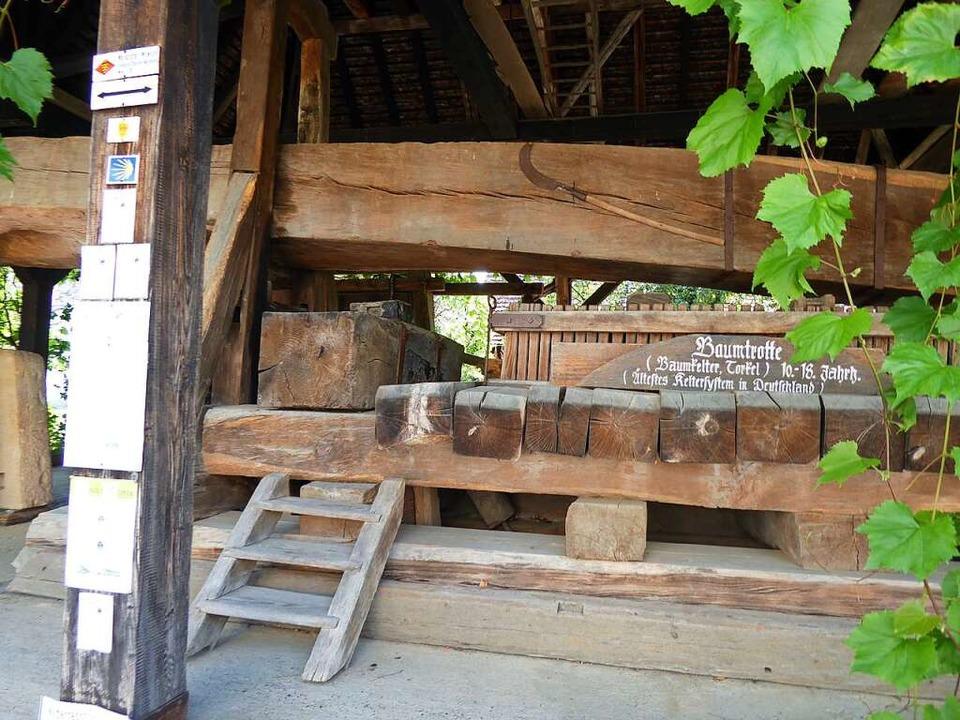 Aber auch nach unten: die Baumtrotte des Weinguts Klöpfer.  | Foto: Michael Neubauer
