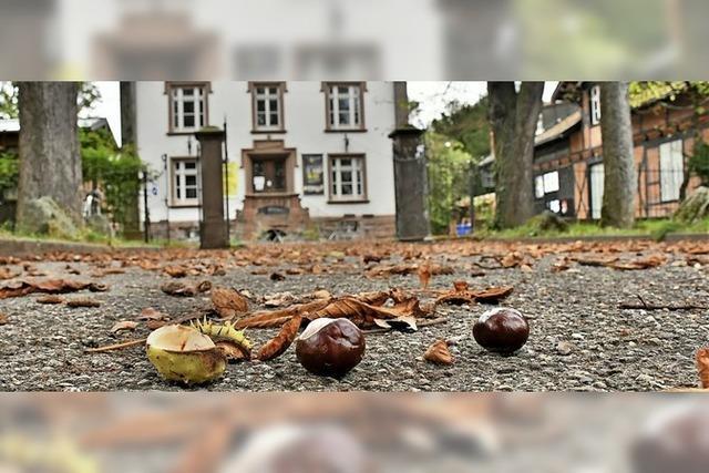 Herbstzeit ist Kastanienzeit