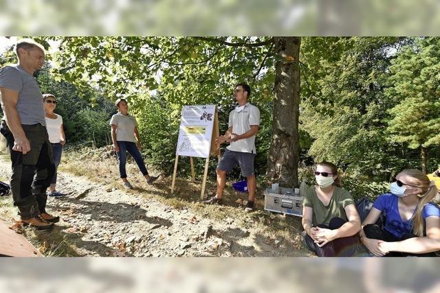 Die Waldmeister