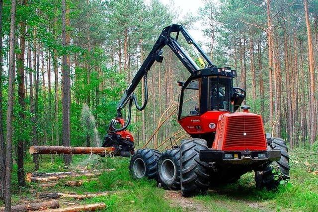 Freiburger Forstamt fällt Bäume entlang der Autobahn