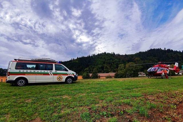 Hornisse sticht Wanderer bei Waldkirch – der erleidet allergische Reaktion