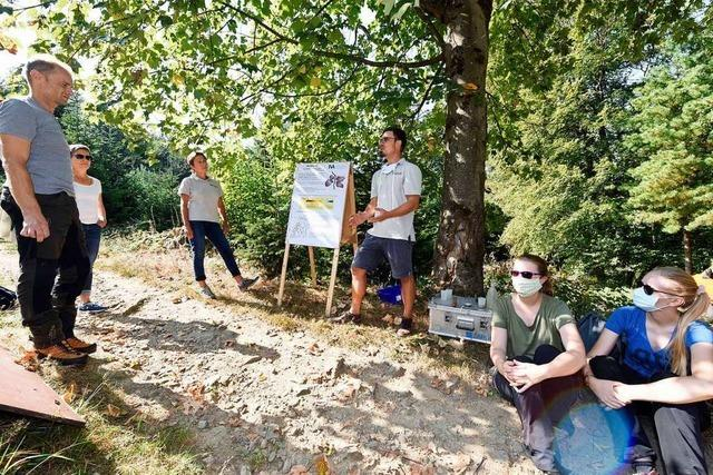 Experten erklären, wie es dem Freiburger Stadtwald geht