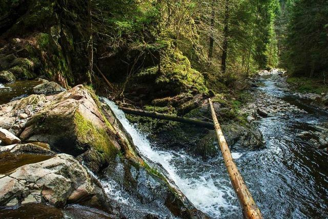Wandertipp: Durch die Rötenbachschlucht