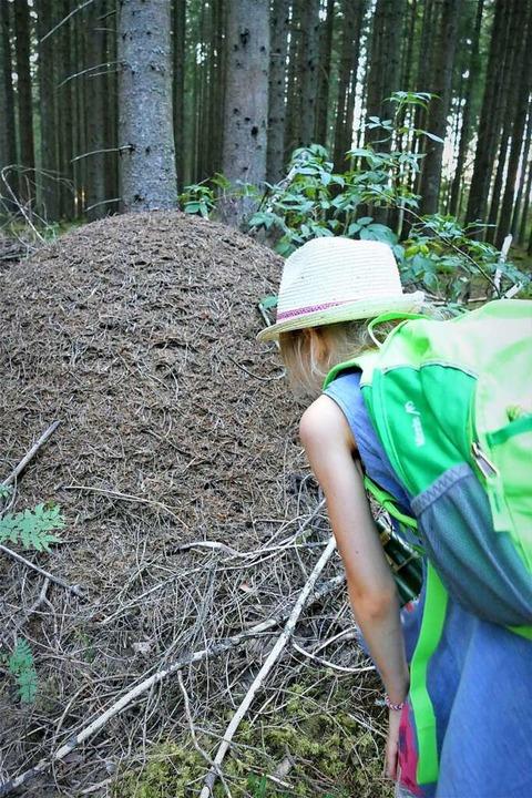 Ameisen schätzen die Gegend und bauen ...ufen – warum, das steht im Text.  | Foto: Silke Kohlmann