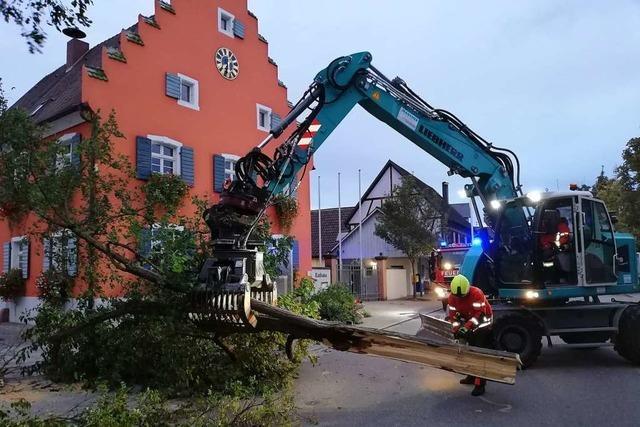 Umgestürzter Baum in Gottenheim gefährdet Verkehr auf der Hauptstraße