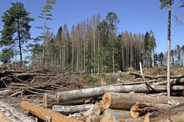 Umbau für einen Forst mit Zukunft