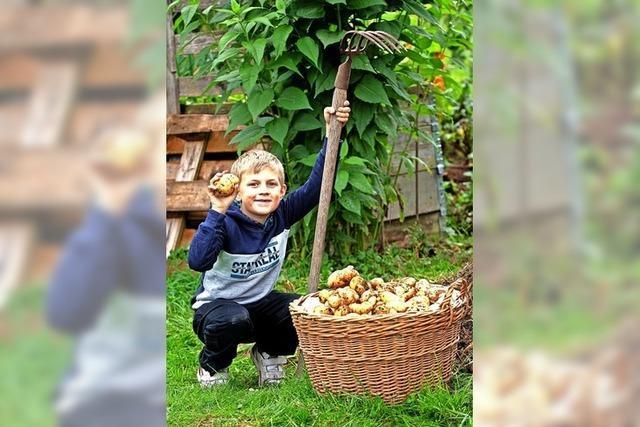 Kleine Ernte, große Freude