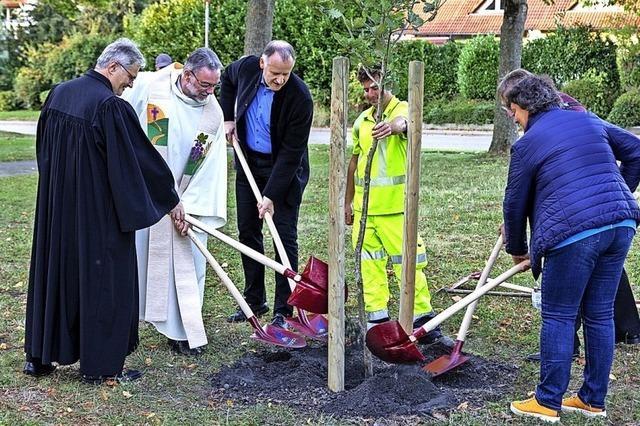 Neuer Baum der Hoffnung gepflanzt