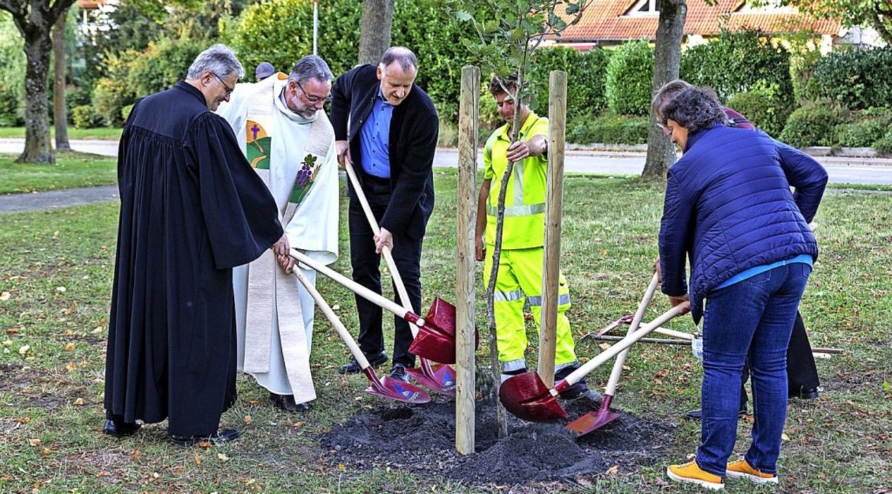 Hier wird auf der Wiese beim Ehrenkirc...in neuer Baum der Hoffnung gepflanzt.     Foto: Hubert Gemmert