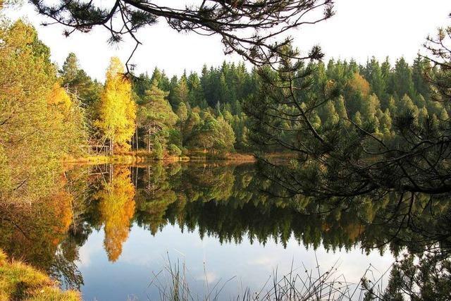 Von Schönwald zum Blindensee, einem Moor im mittleren Schwarzwald