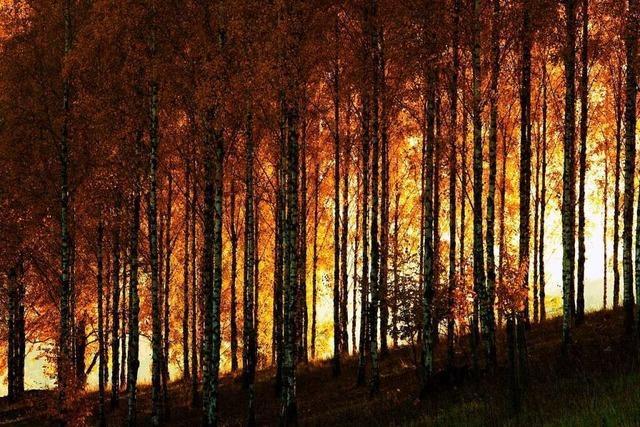 Im Versuchsgelände Liliental bei Ihringen ist man im Bann der Bäume