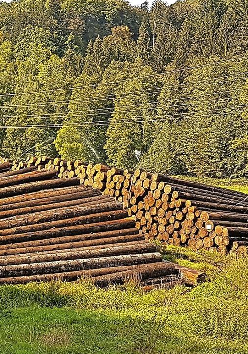 Das Holzlager in Tegernau hat wiederholt für Diskussionen gesorgt.  | Foto: Gerald Nill