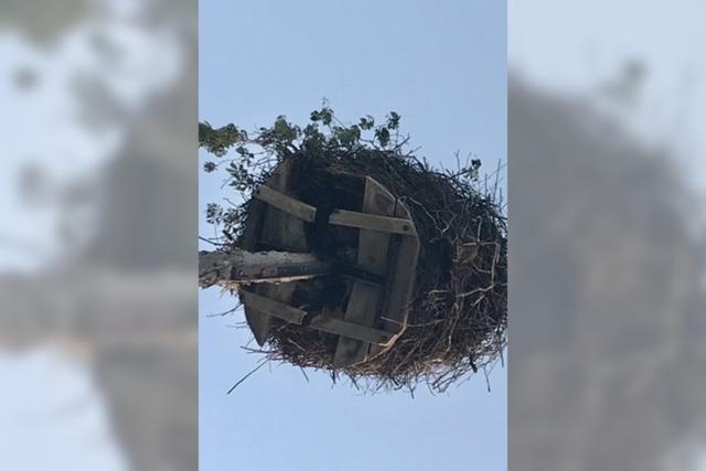 Wohin mit dem Nest?