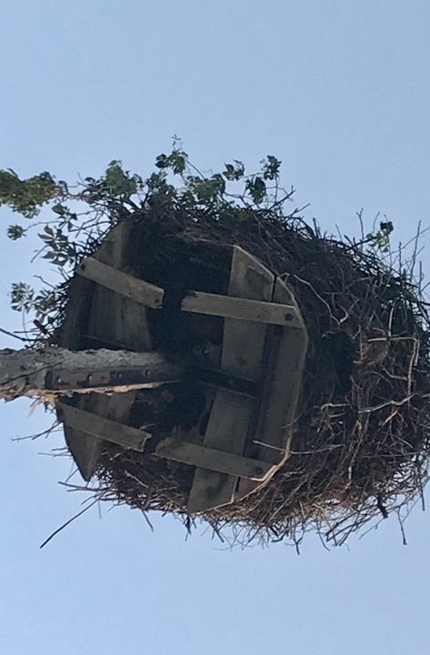 Das Storchennest braucht einen neuen Unterbau und einen neuen Standort.  | Foto: Jutta Schütz