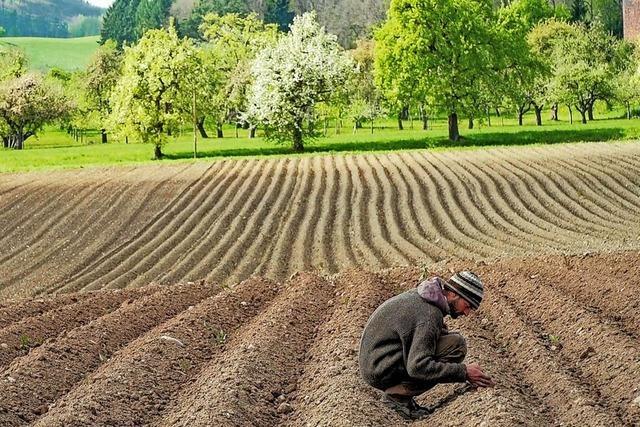 Fruchtbare Erde wird Mangelware