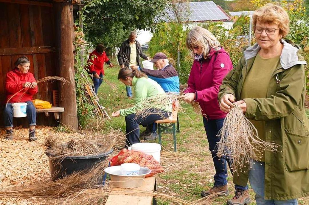 Praxistest für die Gäste: Wie gewinnt man Saatgut?  | Foto: Hannah Köster