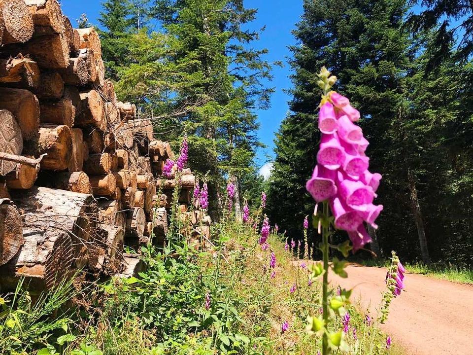 Blumen am Wegesrand: Ein letzter breit...Picknickstelle zum Huberfelsen abgeht.  | Foto: Ronja Vattes