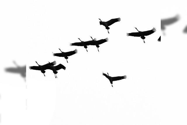 Nabu: Vögel ziehen früher