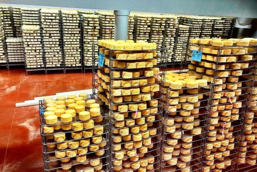 Camembert-Laibe bei der Reifung  | Foto: Knut Krohn