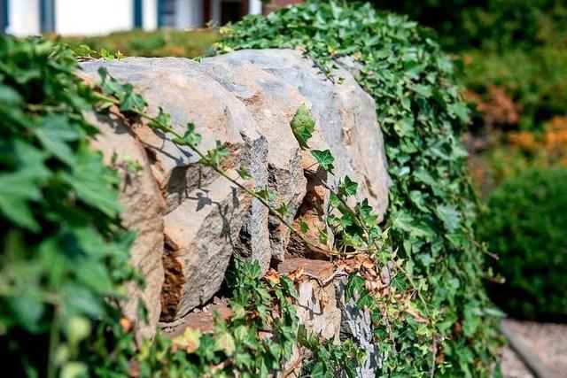 Grundstücksbesitzer muss eine Natursteinmauer in Grenzach abbauen