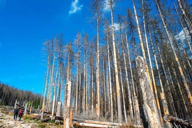 Dem Wald im Kreis Lörrach geht es schlecht