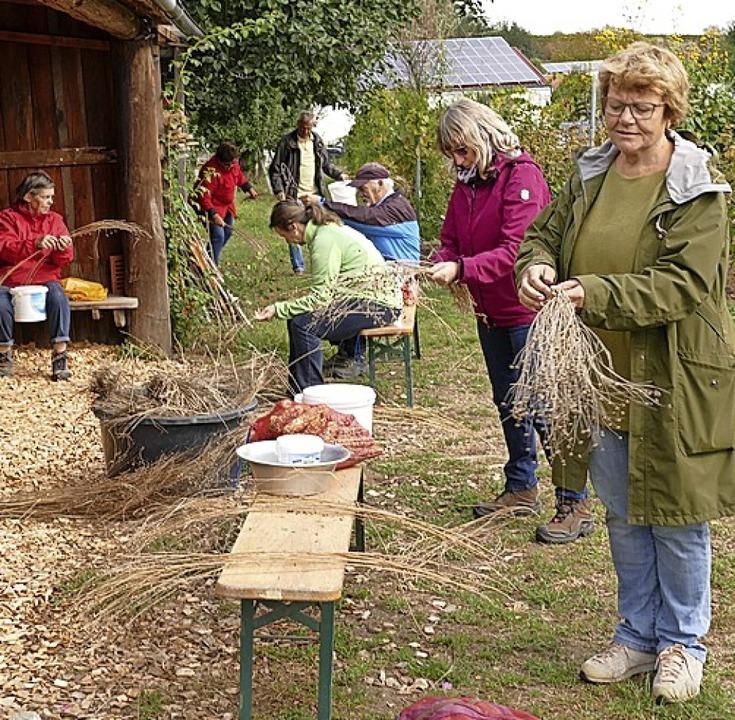Praxistest für die Gäste: Wie gewinnt man Saatgut?