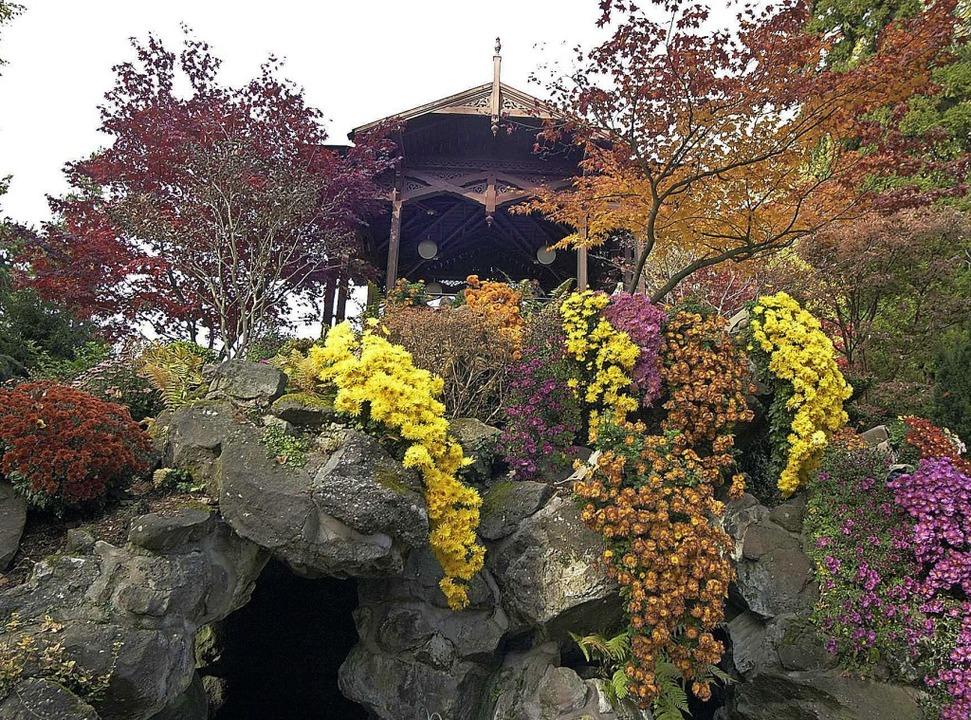 Der Pavillon im Stadtpark ist schon mit Chrysanthemen geschmückt.     Foto: Stadt Lahr