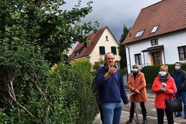 Fünf wissenswerte Fakten über die Bäume in Rheinfelden