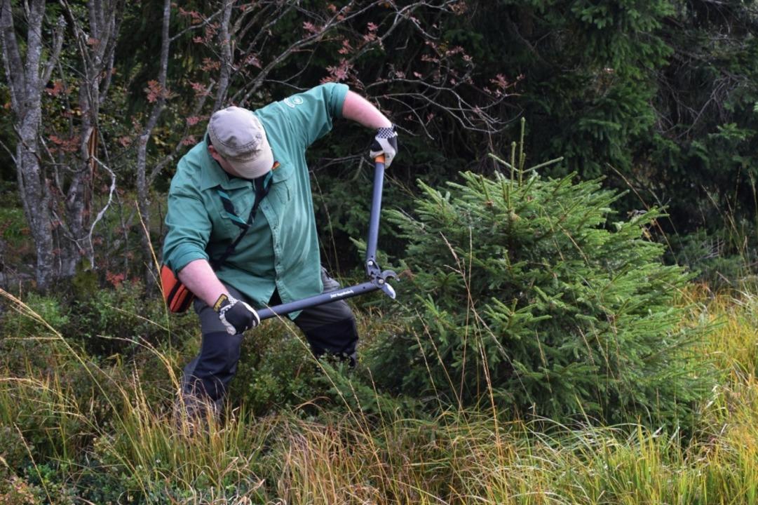 Beim Landschaftspflegetag in Fröhnd kö...n und Helfer mitanpacken (Symbolfoto).  | Foto: Friederike Scharfe (Nationalpark Schwarzwald)