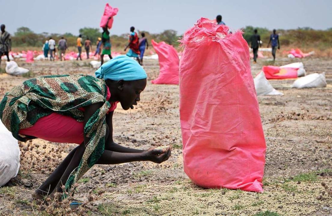 Eine  Frau im Südsudan sammelt Hirse vom Boden auf.  | Foto: Sam Mednick (dpa)