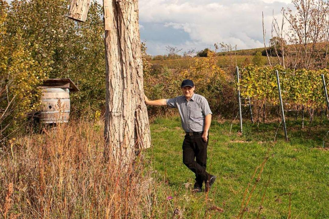 Heinrich Gretzmeier bei einem Totholzb...uchten Barriquefass nisten Wiedehopfe.  | Foto: Hubert Gemmert
