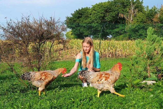 Schallstadter Hähne finden neues Zuhause im Hühnergehege in Biengen