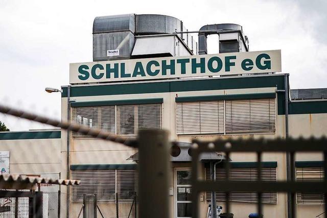 Gequälte Schweine im Schlachthof: Agrarminister Hauk sieht bei sich kein Versäumnis