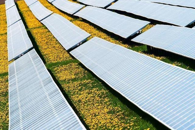 Größte solarthermische Anlage Südbadens ist in Ettenheim in Betrieb